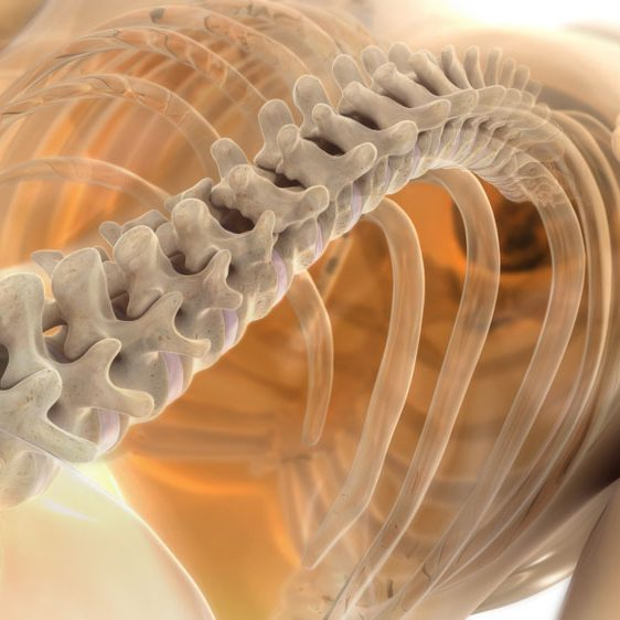 Spine image for Pensacola Chiropractor