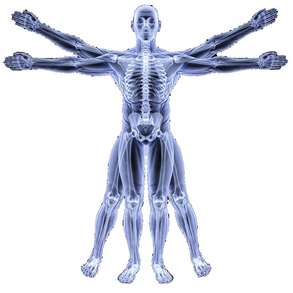 Body Image-Chiropractor Pensacola